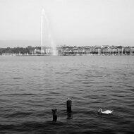 日内瓦大喷泉(Jet d'Eau, Geneva)